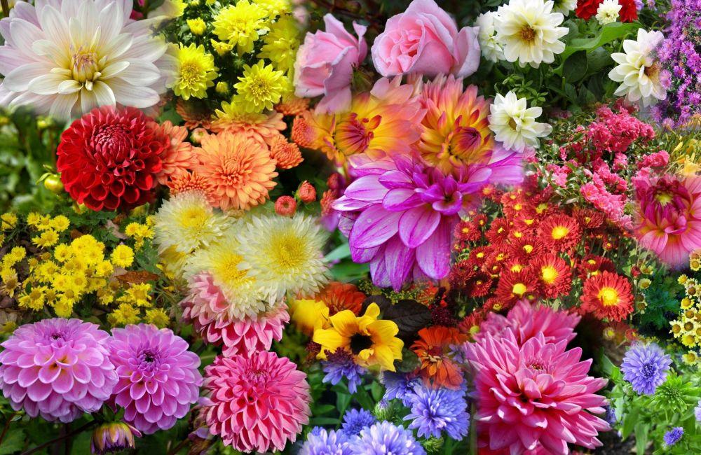 4 Flori De Toamna Care Rezista Pana La Inghet Cosimo